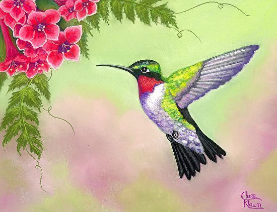 "Ruby Throated Hummingbird by Clare Klaum Pastel ~ 7"" x 9 ..."