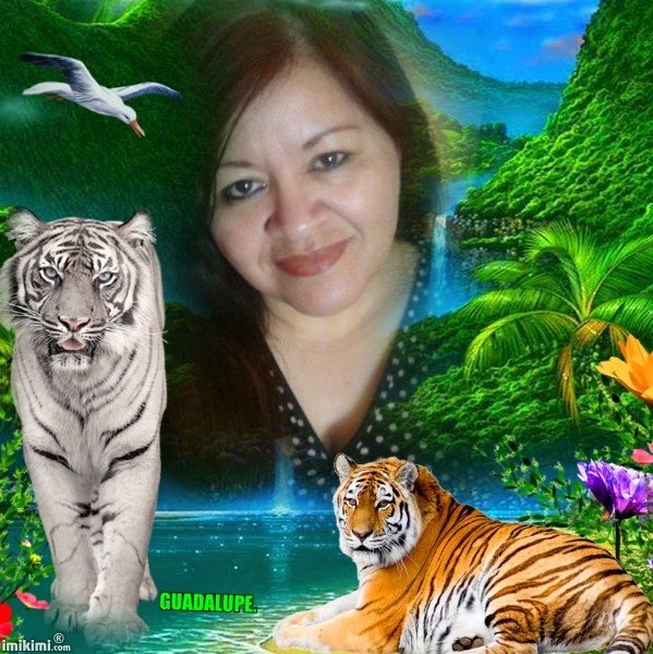 Nature with tigers