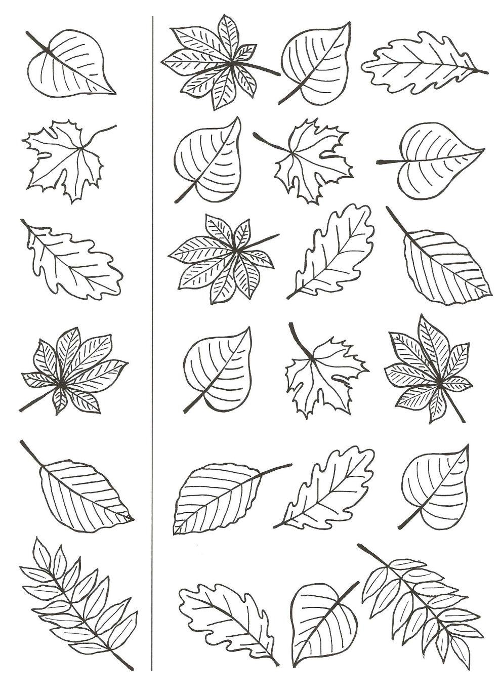 Herbst Ausmalbilder Blätter : Pin By Mary Breveleri On Printables Pinterest Autumn Bullet And