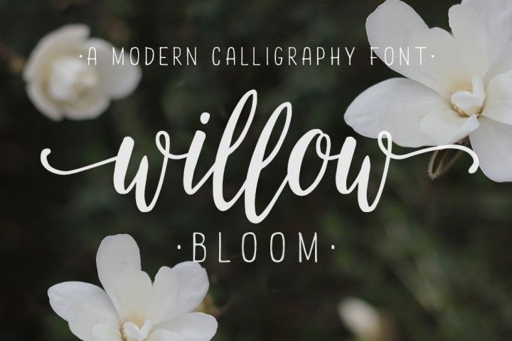 Modern calligraphy font willow bloom calligraphy fonts modern