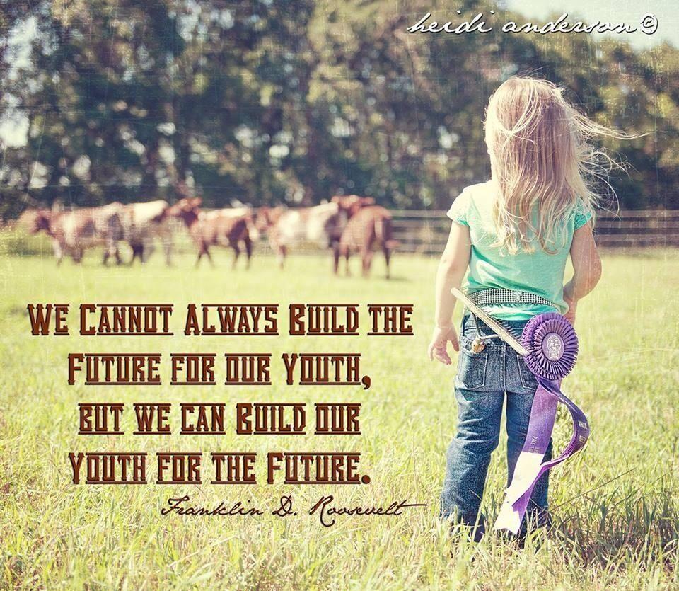 Show cattle www.titanoutletstore.com