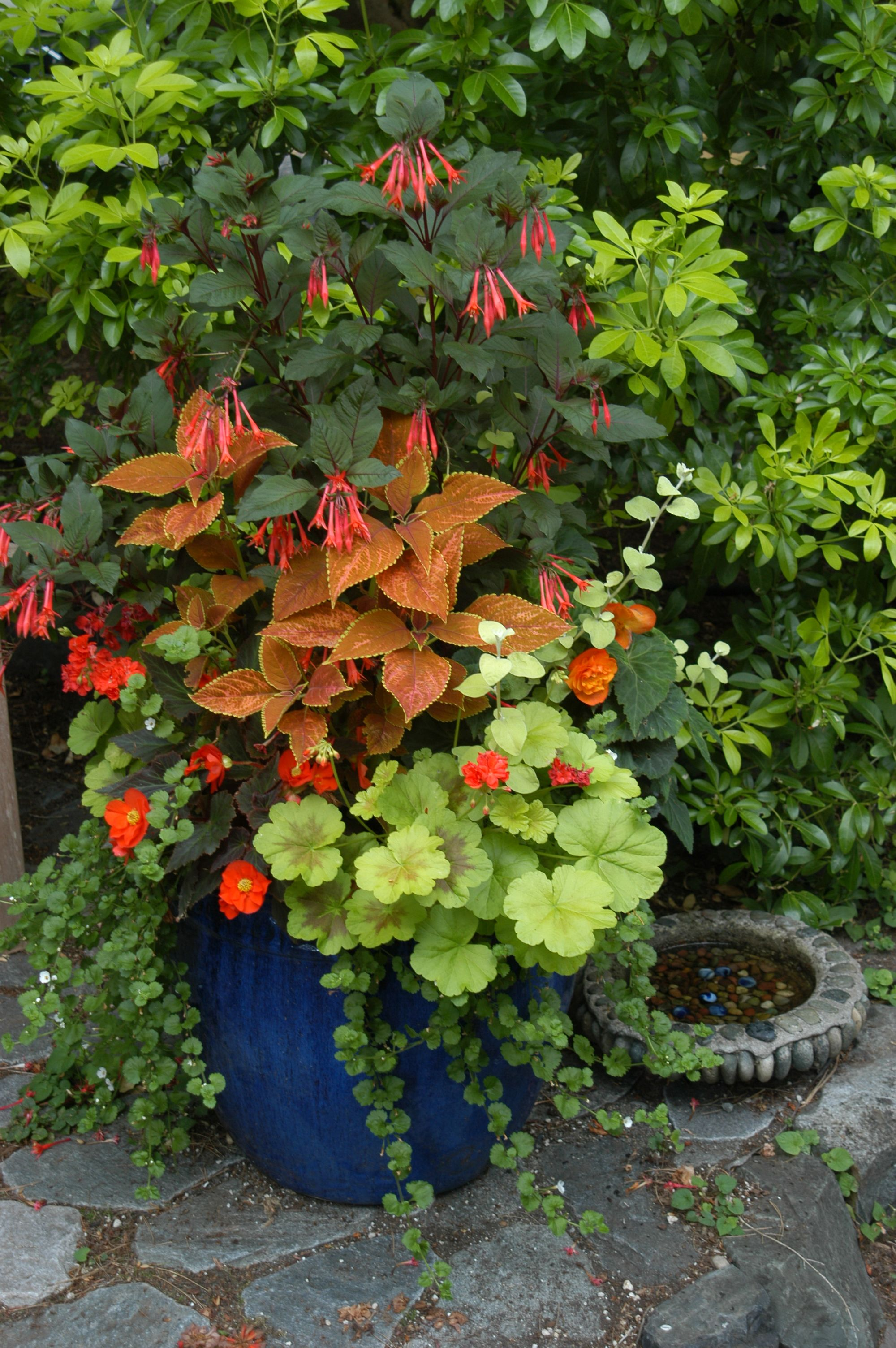 Contemporary Garden Design Container Plants Plants Garden Containers