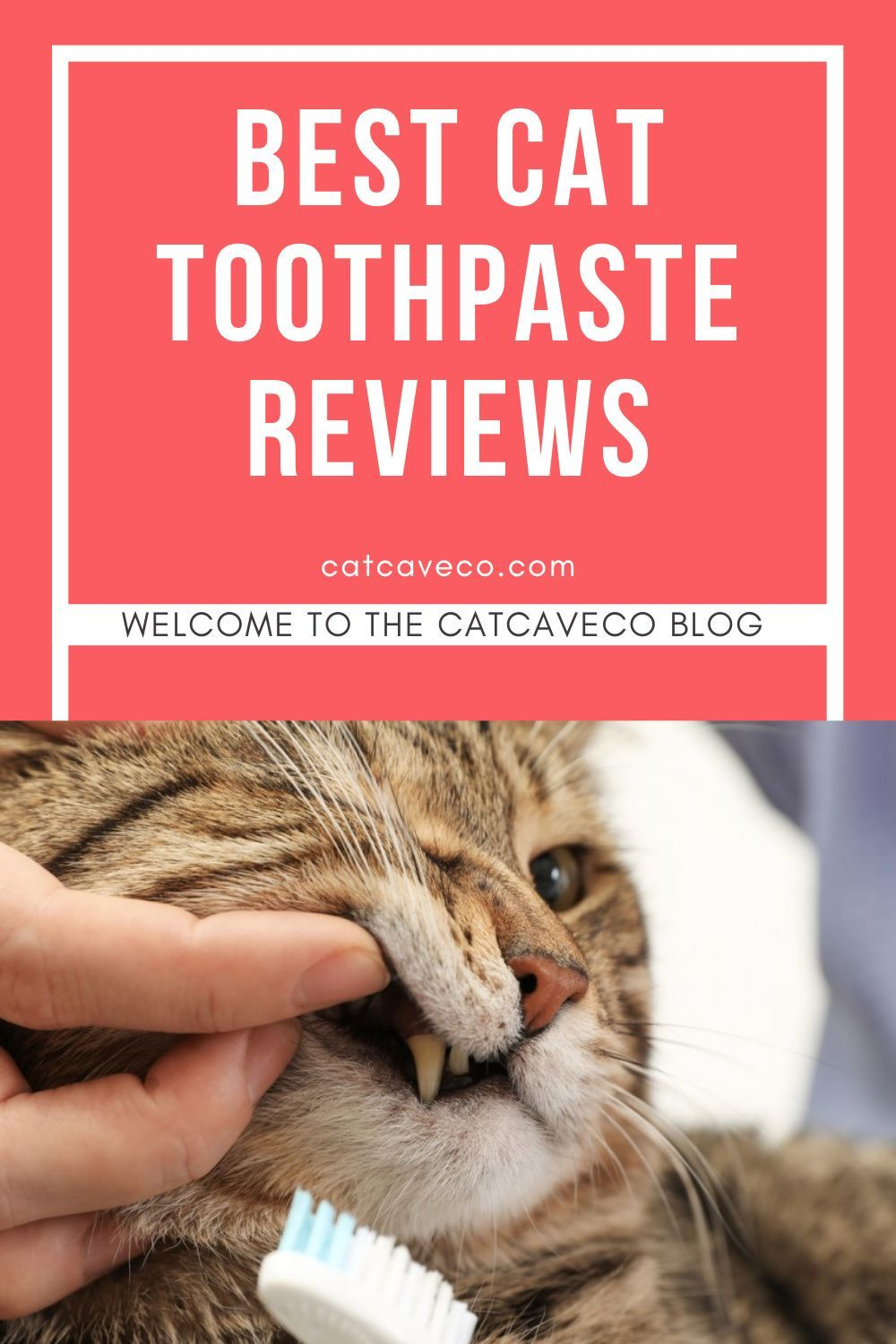 Best Cat Toothpaste And Teeth Cleaning Guide In 2020 Cats Cool Cats Teeth Cleaning