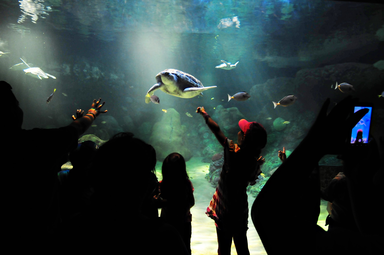 Turtle Reef Exhibit at SeaWorld San Diego