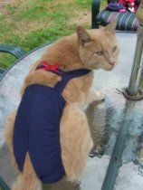 "Joybies Navy Blue Piddle Pants(tm) for Large Cat (Measuring 17""-19"" Along Back from Collar to Base of Tail)"