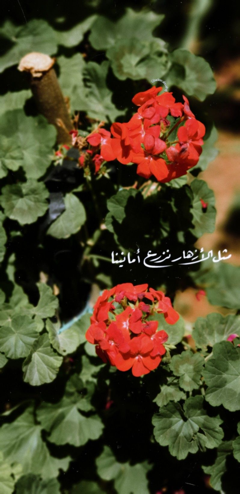 مثل الأزهار نزرع أمانينا Daisy Art Cute Cartoon Images Cartoon Images