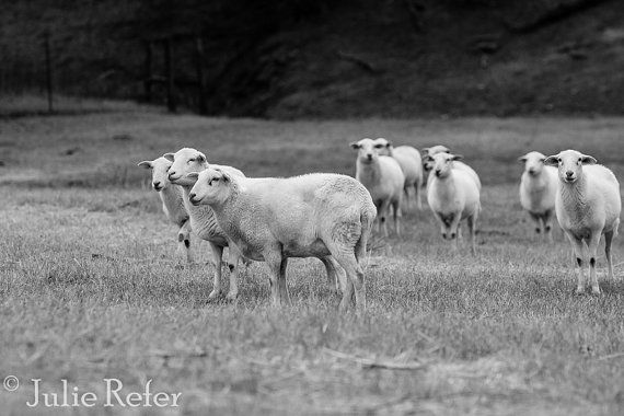 Sheep farm animal photography black and white farm by jrefer 29 00
