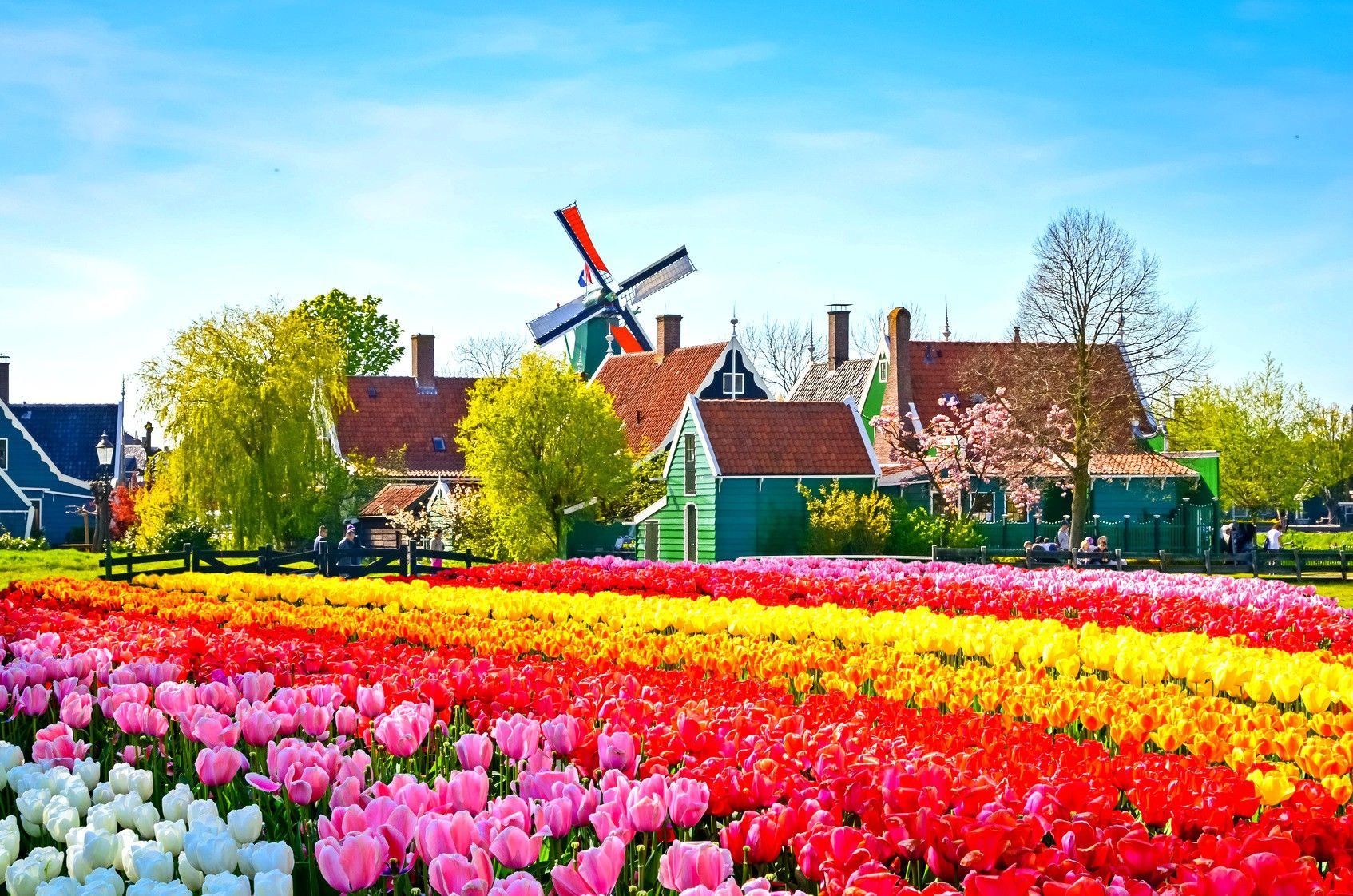 Day trips from Amsterdam and best place to visit | Flower garden, Beautiful gardens, Zaanse schans windmills
