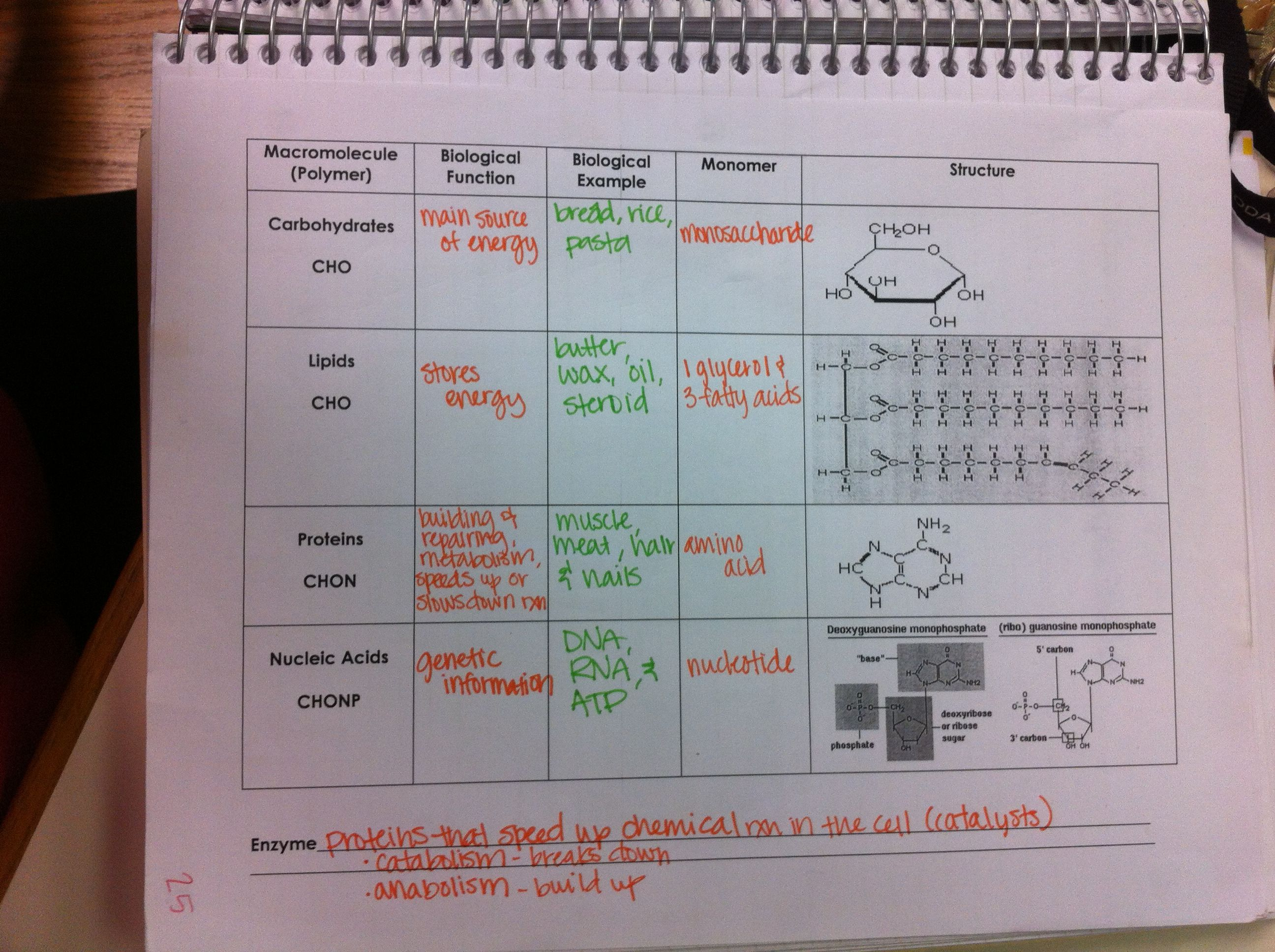 Macromolecules Chart Structures