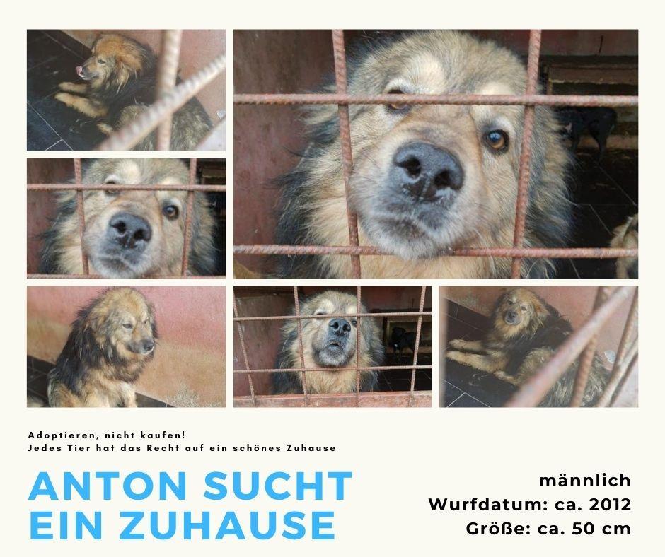 Name Anton Wurfdatum 2012 Grosse Ca 50 Cm Geschlecht Mannlich Kastriert Aufenthaltsort In Frankfurt In Pflege Mehr In 2020 Hunde Vermittlung Tierheim Hunde Tierheim