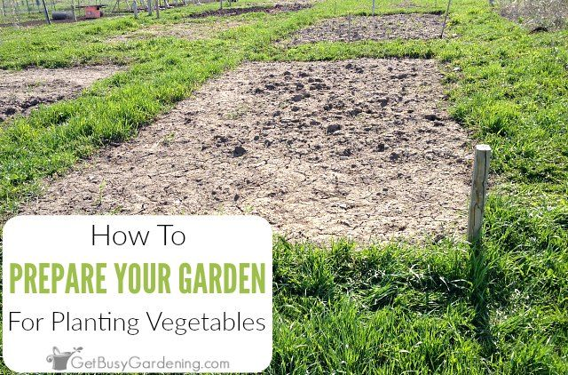 How To Prepare A Garden Bed For Planting Vegetables (With