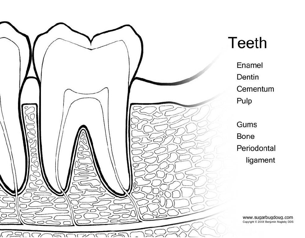 Tooth Diagram for Kids. Created by the amazing Pediatric