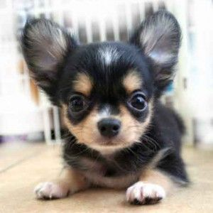 Pin by Tina Marie on Pups and dogs (With images