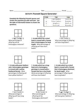 Punnett Square Review Worksheet