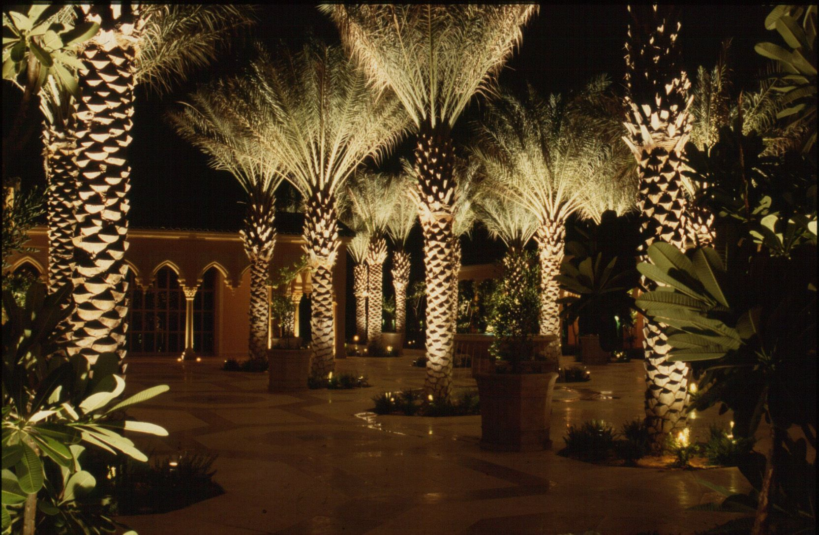 Landscape Lighting For Palm Trees : Uplighting landscape signature palms the light