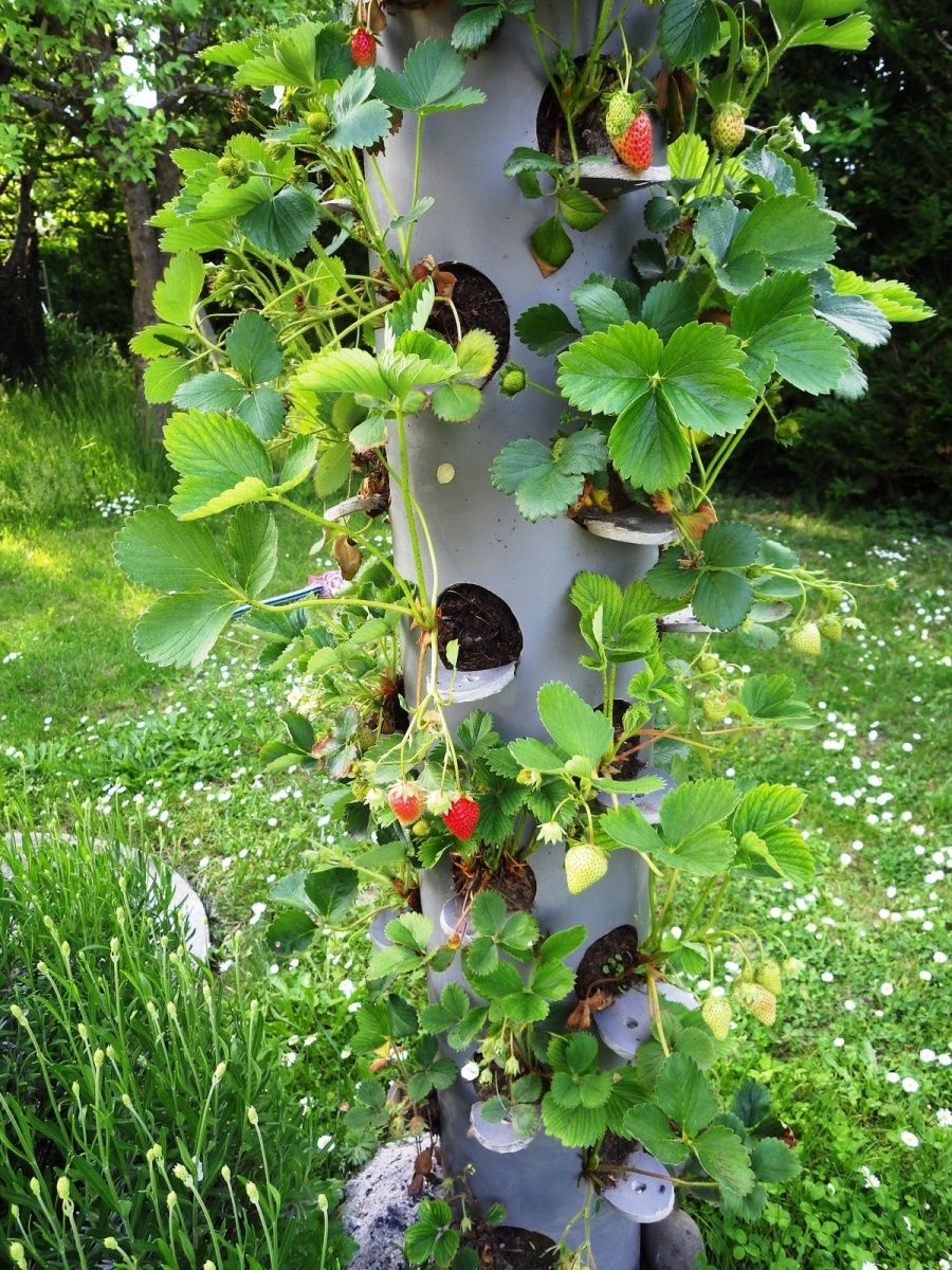 tour fraises jardin pinterest jardin potager jardins potagers verticaux et tour a fraisiers. Black Bedroom Furniture Sets. Home Design Ideas