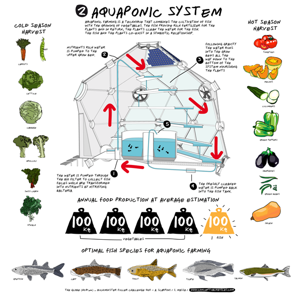 Feed your family fresh food and fish yourself with globe for Hydroponic system with fish