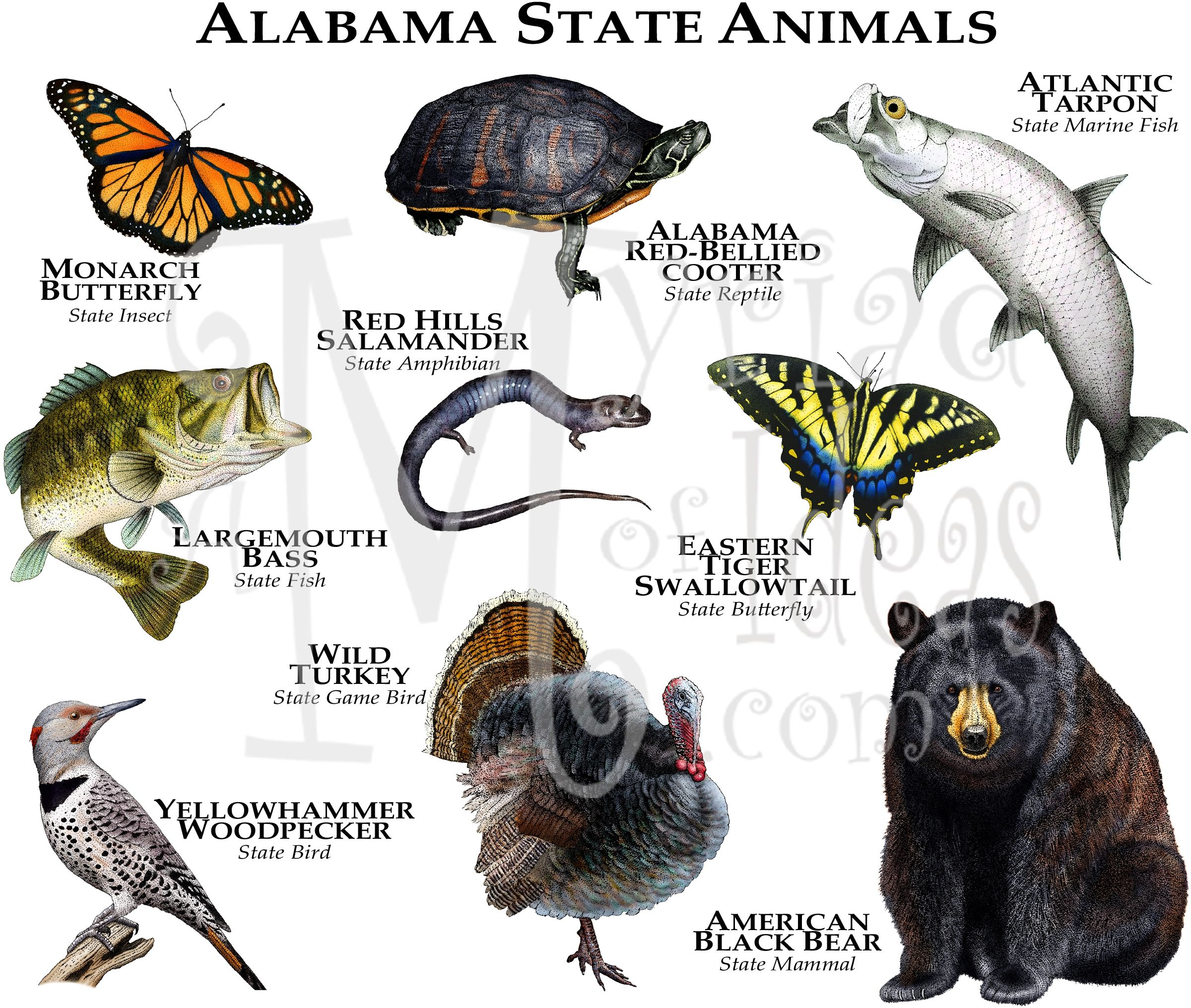 Animals Of The State Of Alabama Tee Rhs 001