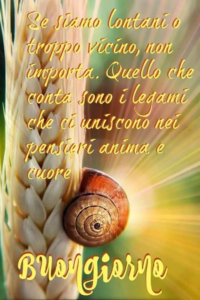 http://ift.tt/2xvaqxM Frasi di buongiorno sms di ...