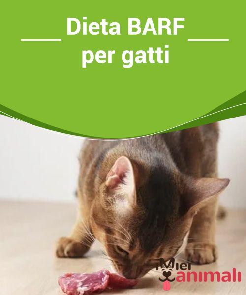 barf di dieta dimagrante per cani
