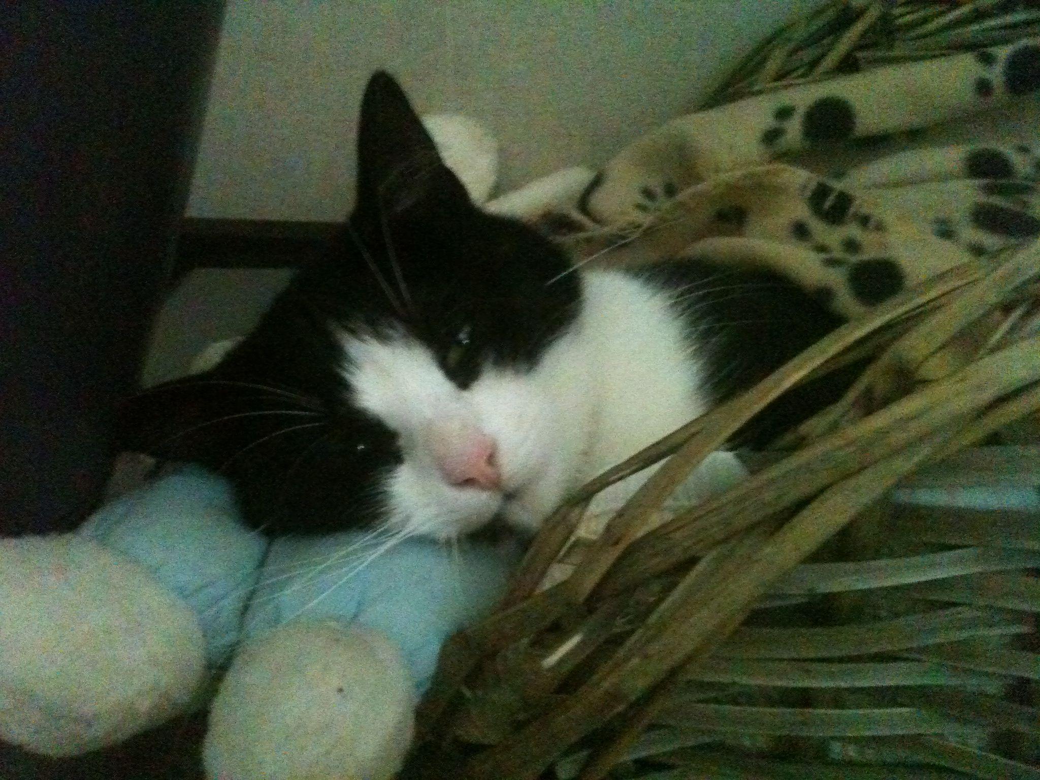 Loves her blanket and rabbit..