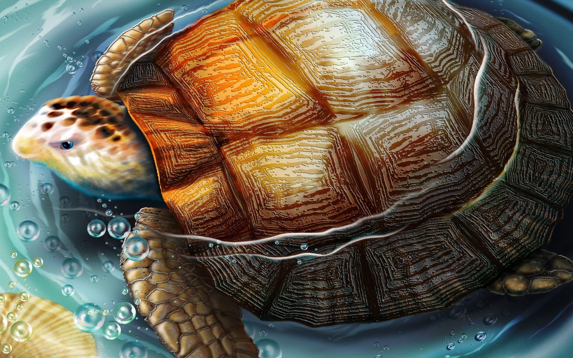 95707146518 Importance of Tortoise and its Direction in Vastu Sashtra   MyDecorative.Com