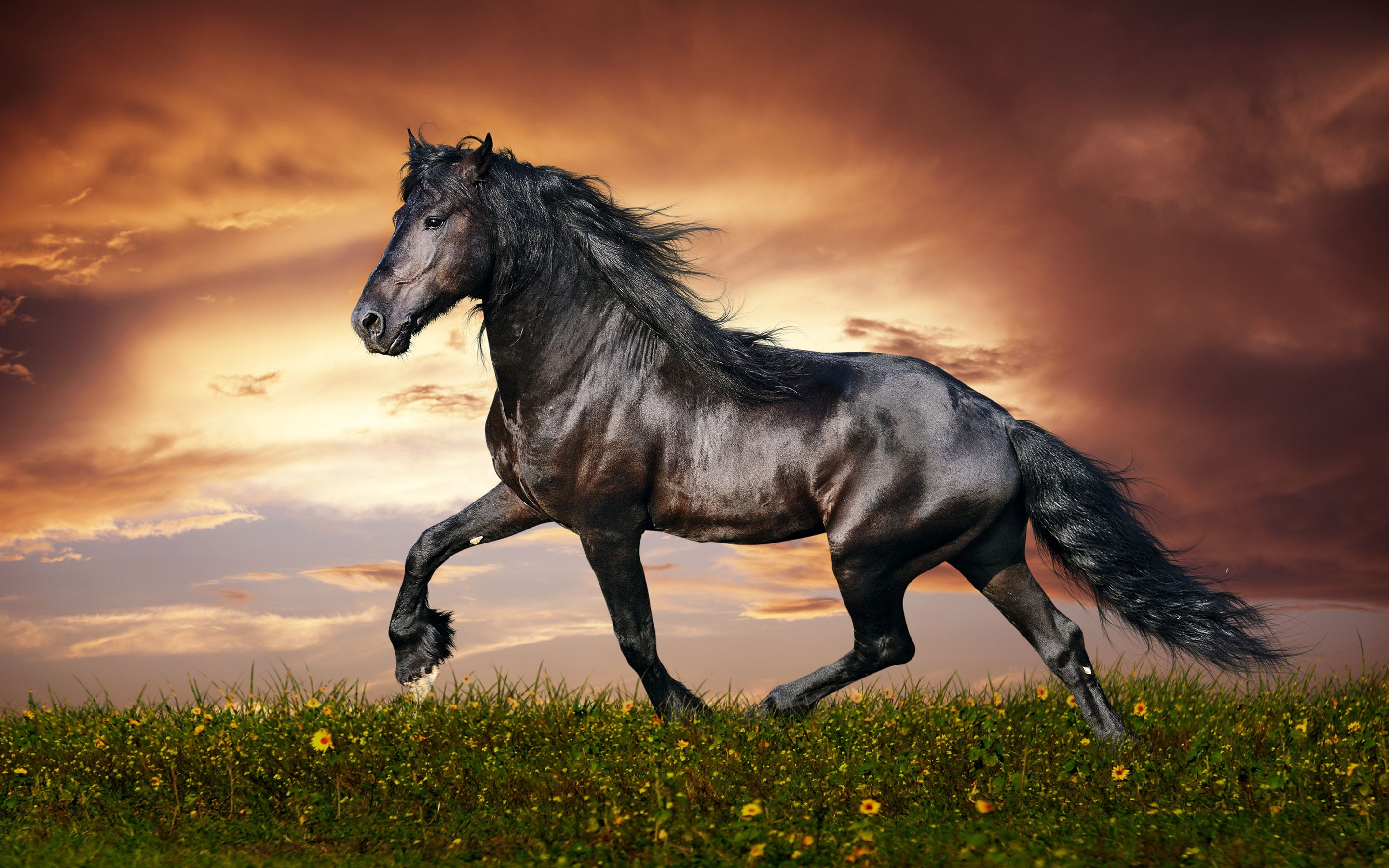 horse awesome widescreen desktop wallpaper for background