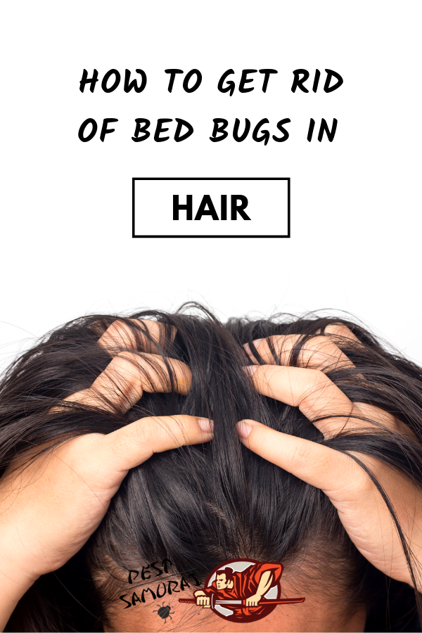 How to Get Rid of Bed Bugs in Hair Easy Instructions