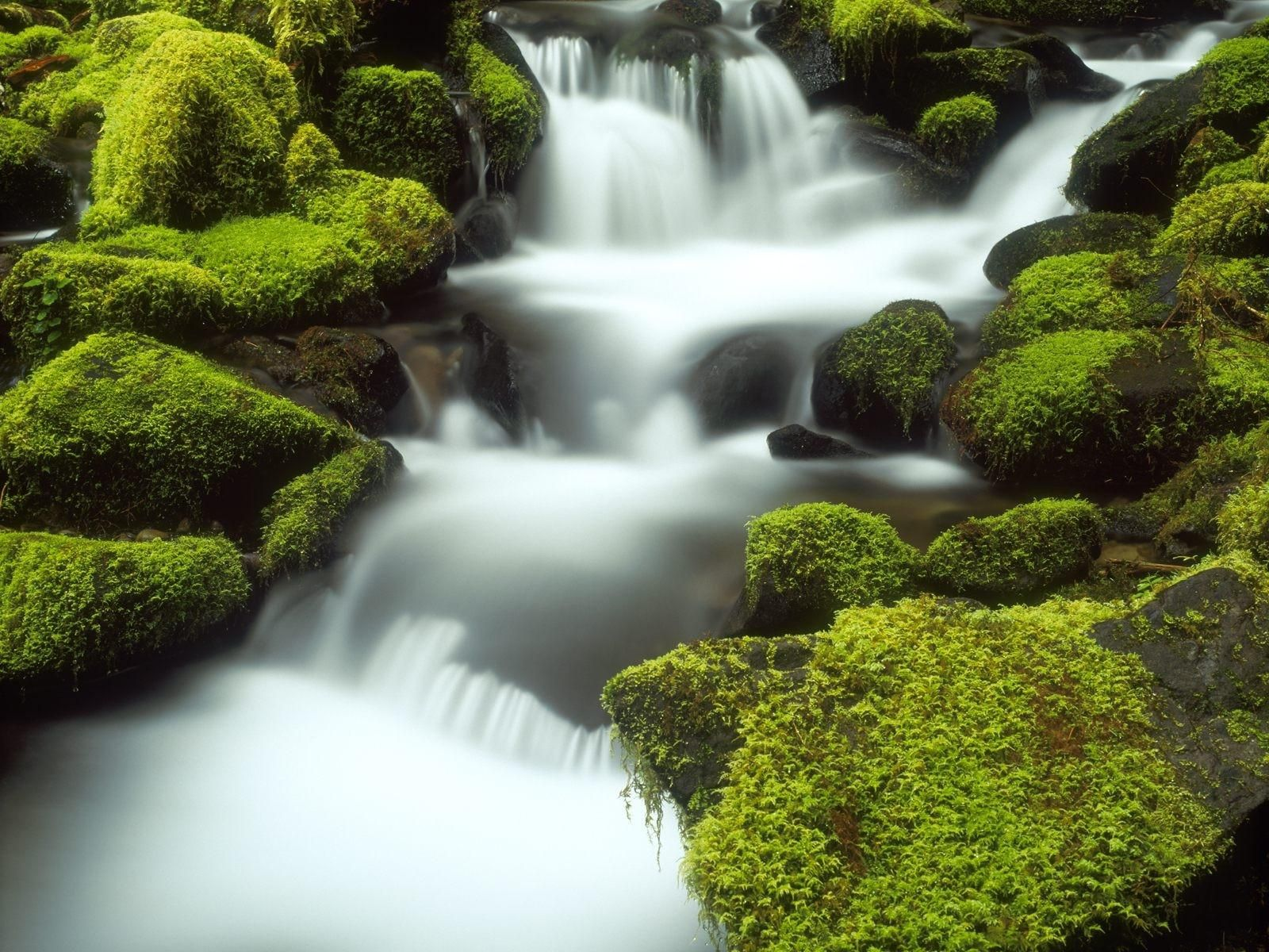 Full Screen Nature Wallpaper For Android