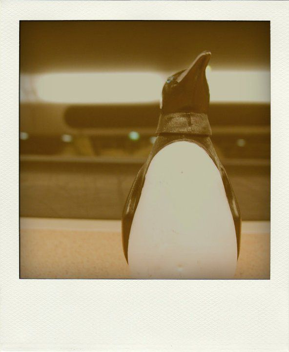 melancholic penguin