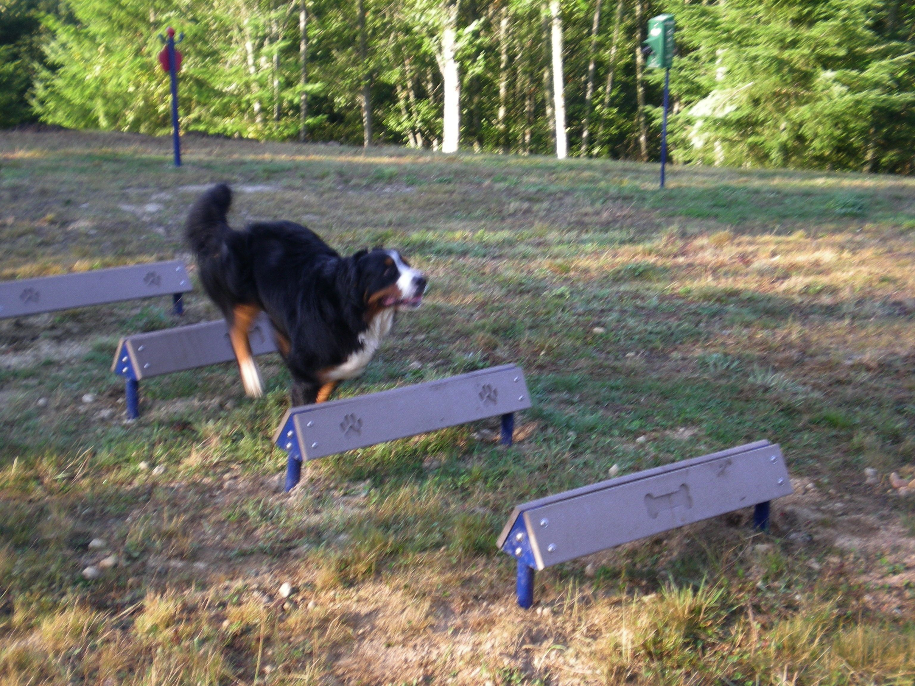 Hurdles  With engraved bone and paw graphics for aided depth perception these are a fun way to spruce up your dog park or play area resort in the gardensHound Hurdles  Wi...