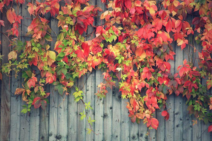 Autumn Colour Cascade by Ursula Rodgers on 500px