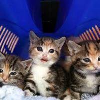 Easy Homemade Formula Recipe For Kittens Cuteness Newborn Kittens Kitten Care Baby Cats