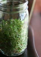 Grow your own sprouts for sandwiches, salads, etc. Takes a couple of days