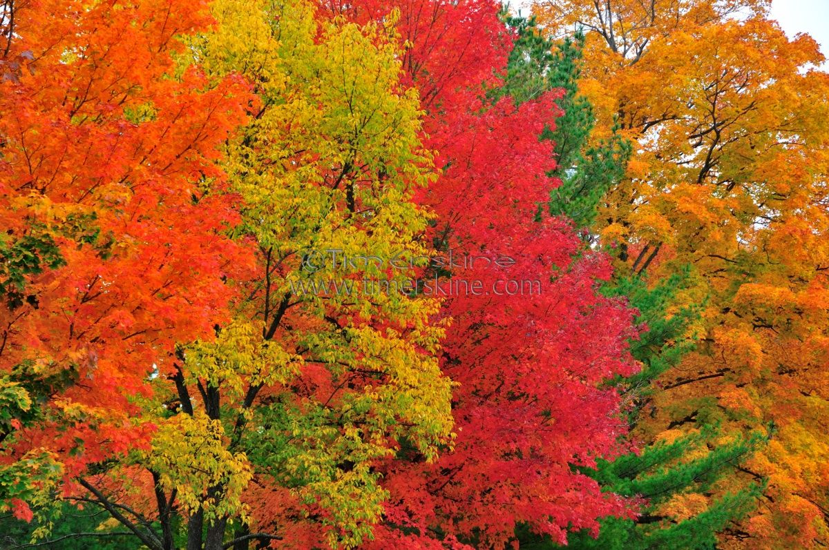 Colors Of Fall wallpapers (68 Wallpapers) – 3D Wallpapers