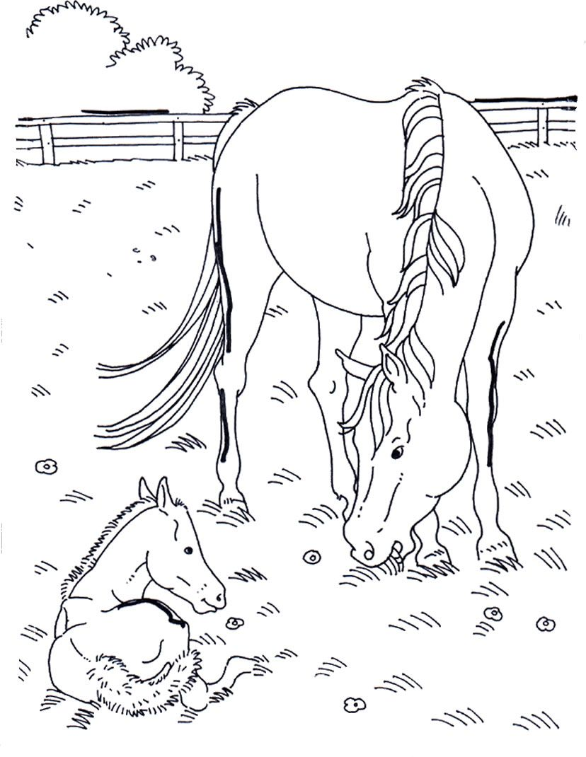 Horses Adult coloring pages Kunst for barn Pinterest Adult