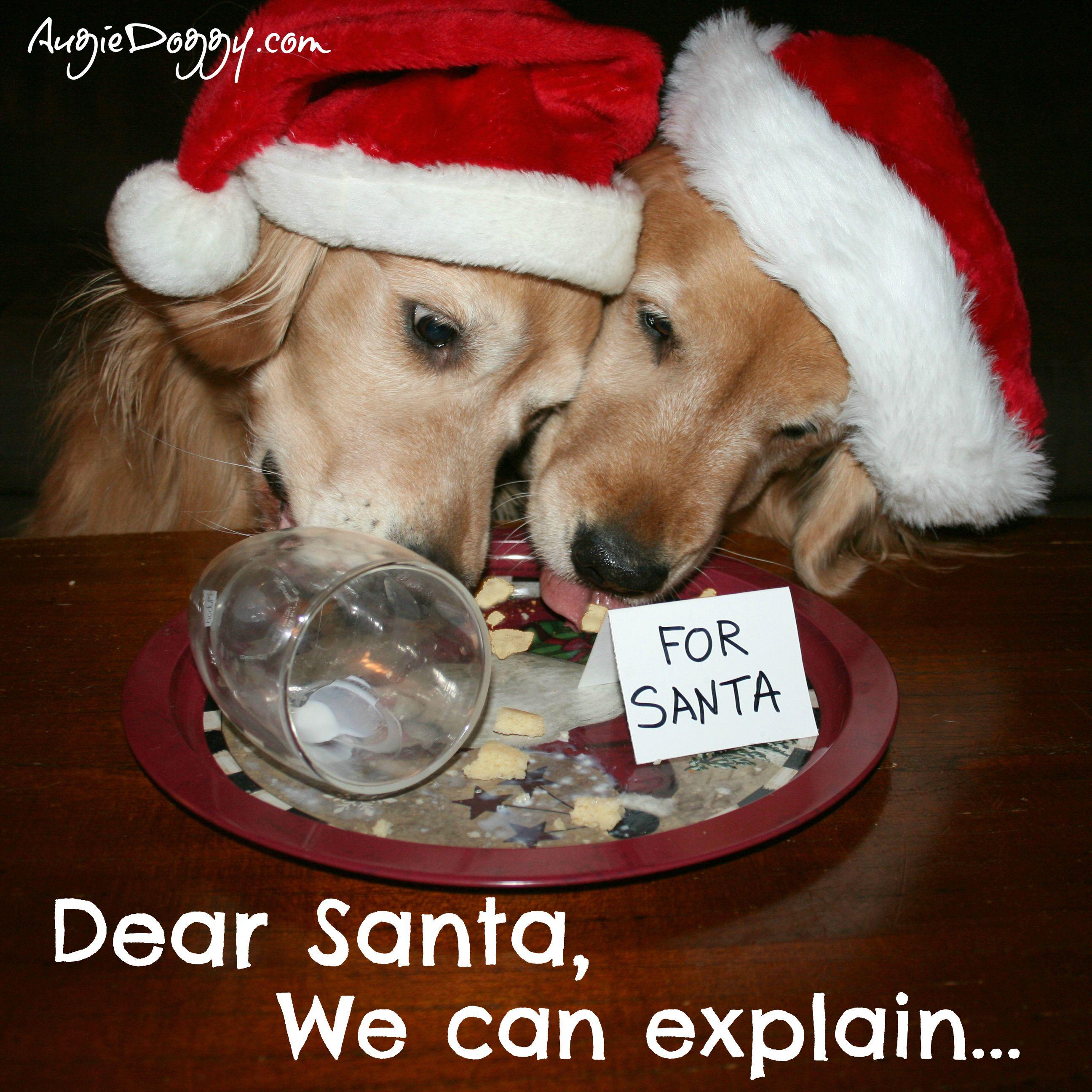 a47ad70ba45 Golden Retrievers with Santa Hats. Funny Christmas design! Dear Santa