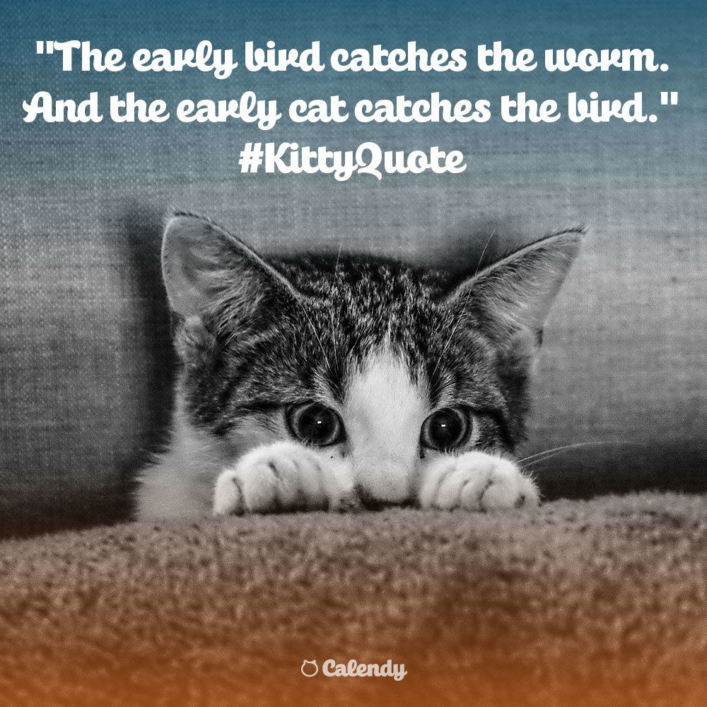 Kittyquote The Early Bird Catches The Worm And The Early Cat