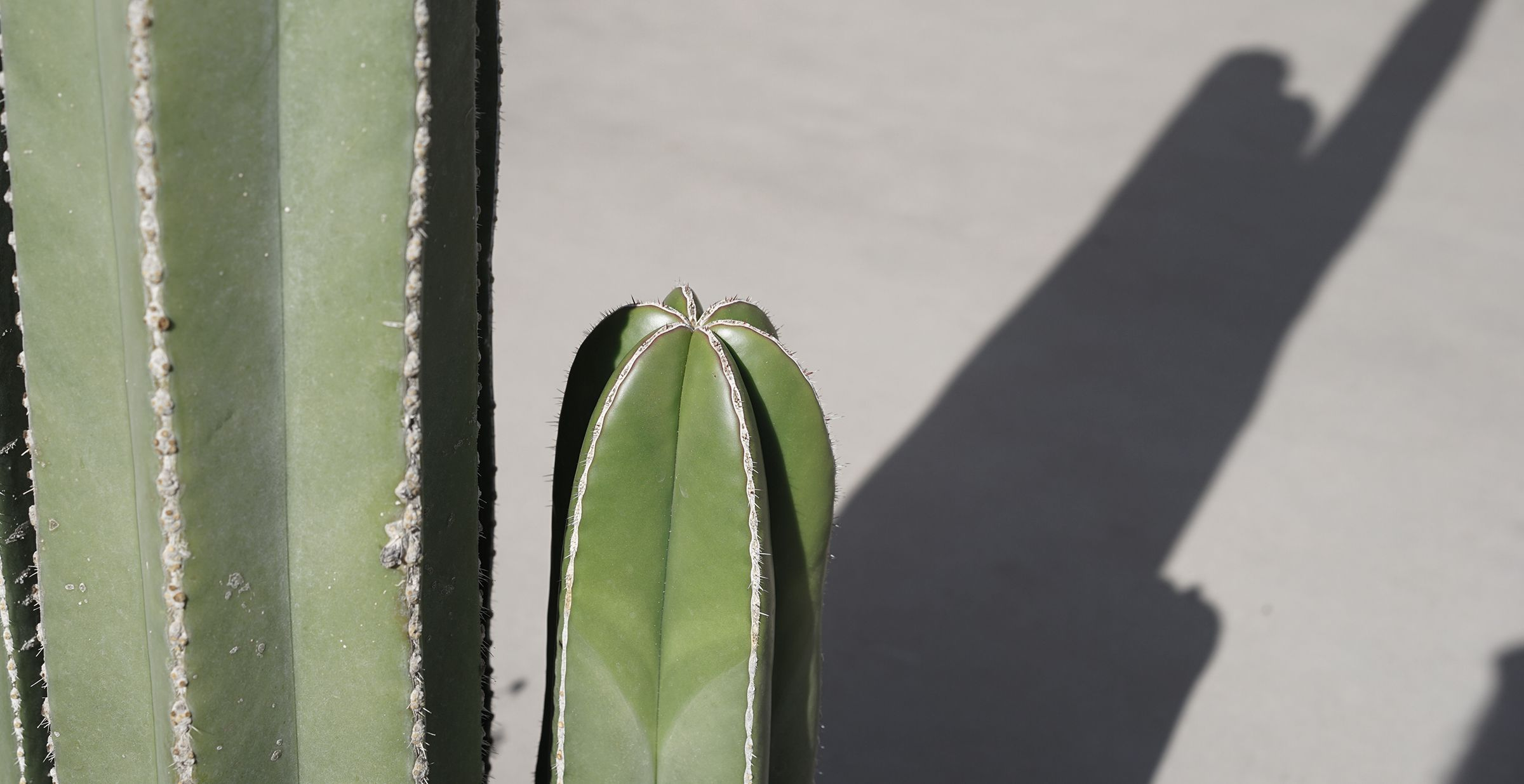 Desert Botanical Garden in Phoenix MyDubio (With images