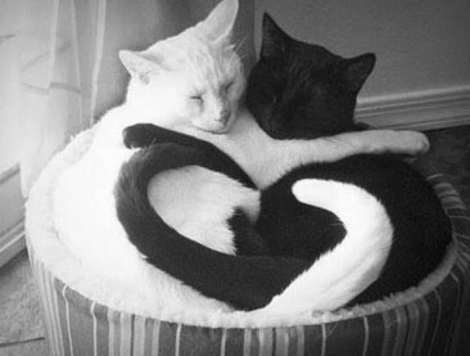Love the tails forming a heart...