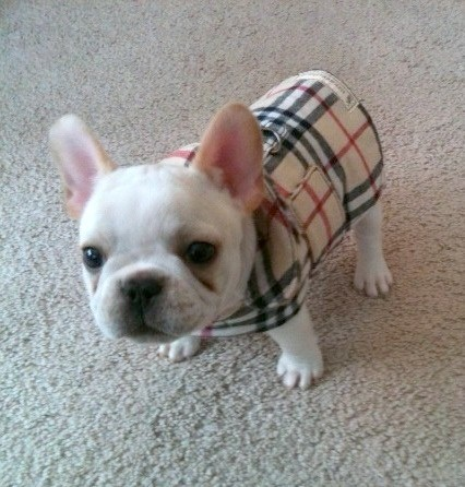 Dog Coat Barkberry Plaid Homespun Cotton And Fleece Dog Coat