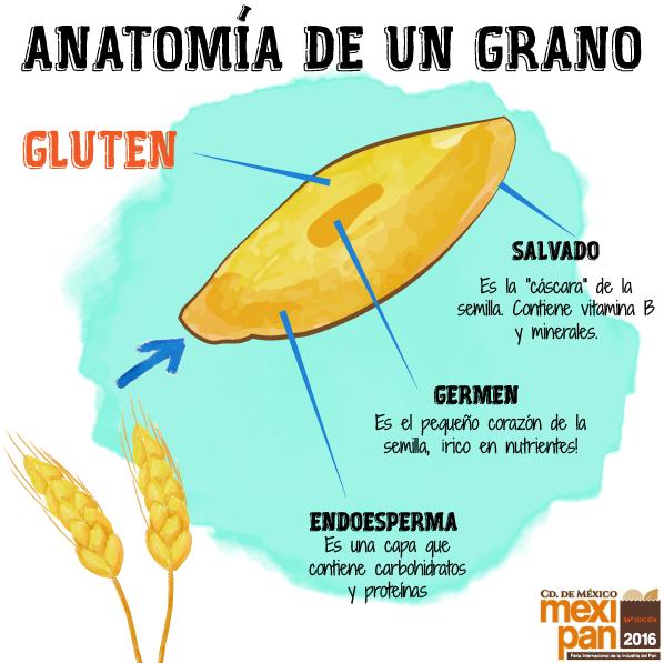 Esta infografía te presenta la anatomía de un grano. #bread #pan ...