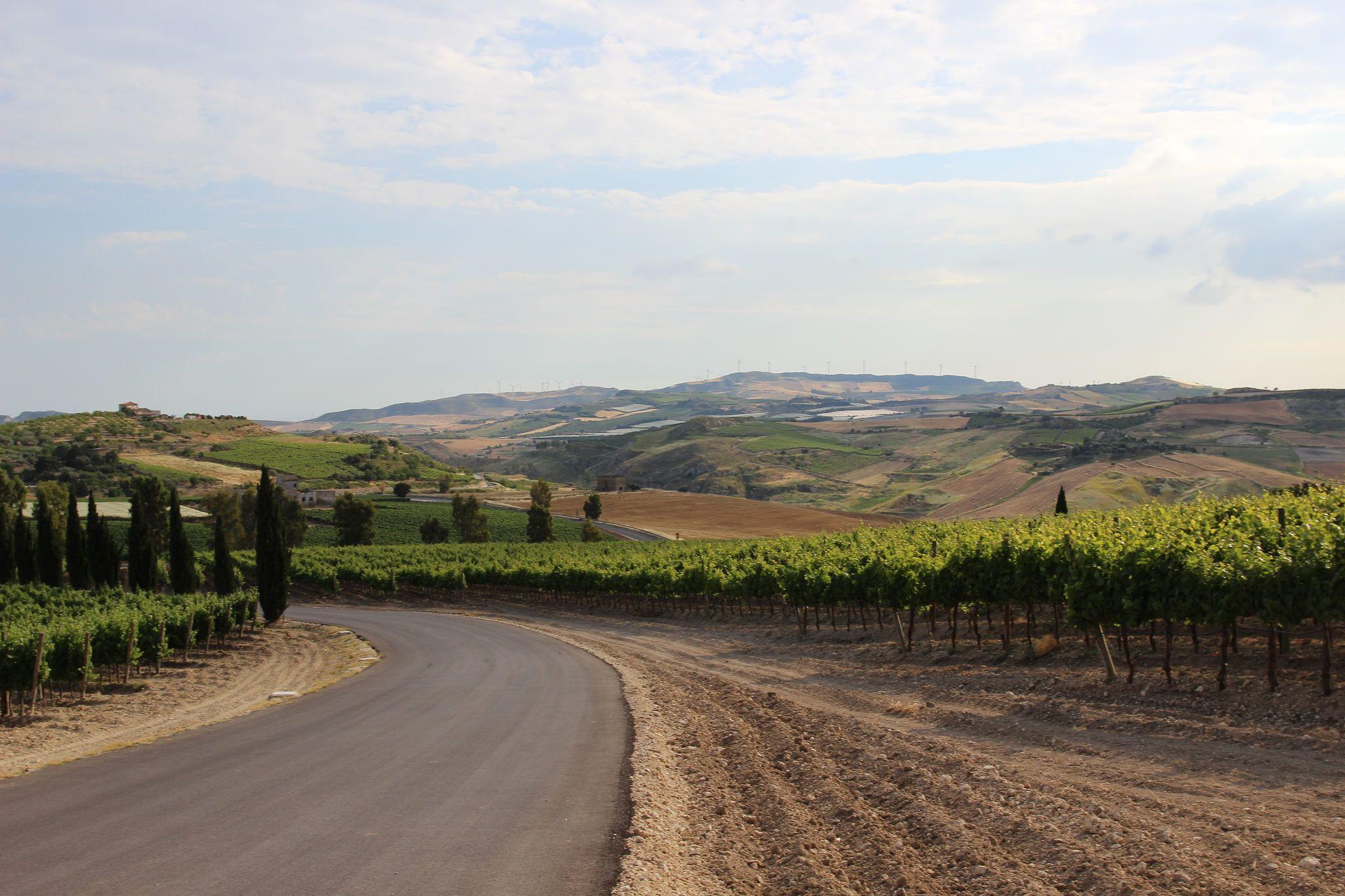 https://flic.kr/p/tM7vRA | IMG_2406 | © Amy Carlisle I Cristo di Campobello vineyard, Sicily.