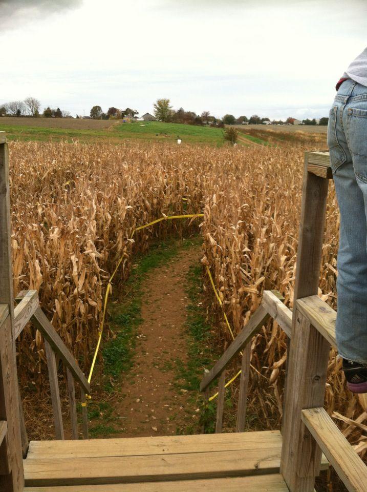 Corn Maze Risser Marvel Farm Market Annville Pa Fun Things To Do Corn Maze Family Fun