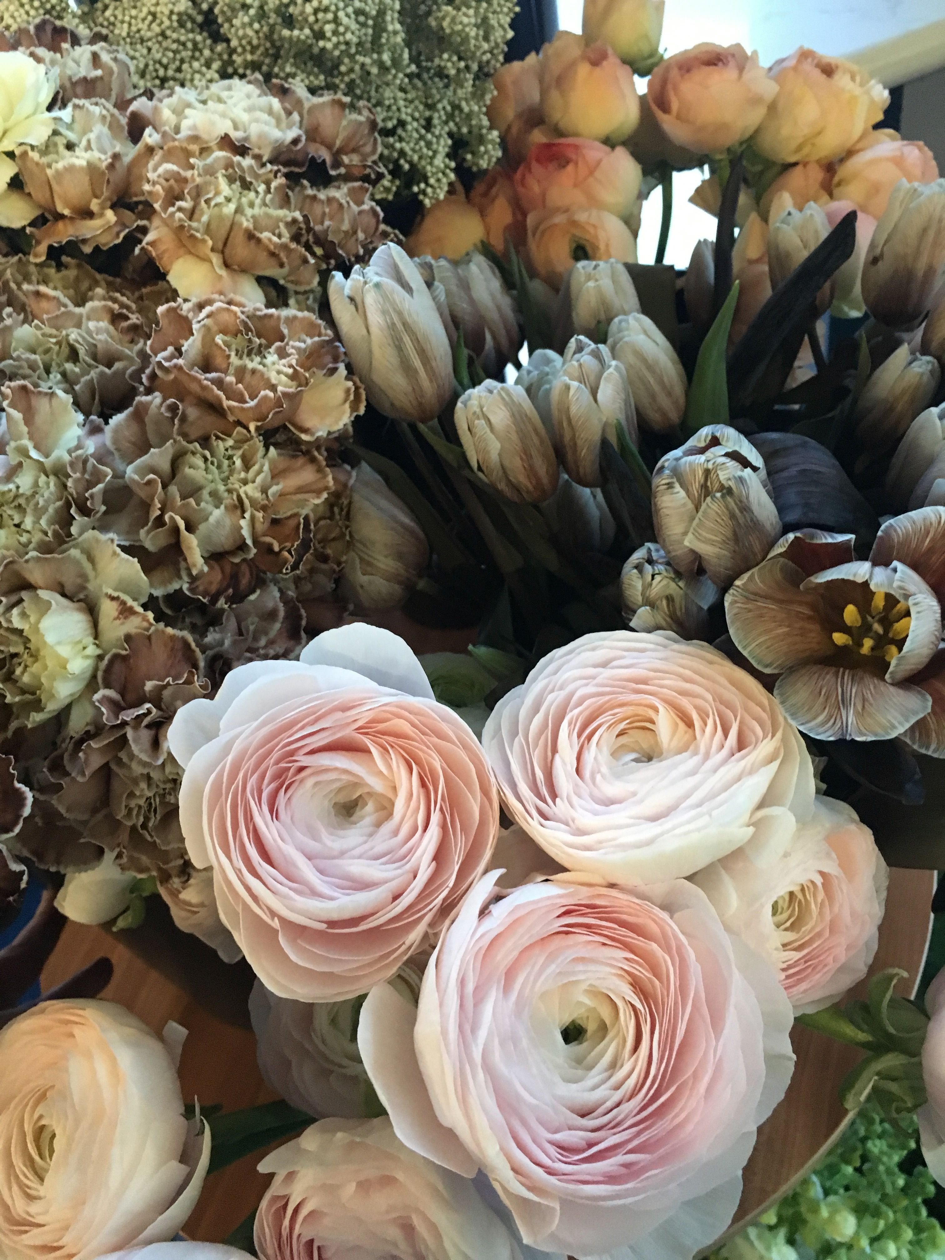 Pin by Rachelle Soucy on BOTANY Flowers online