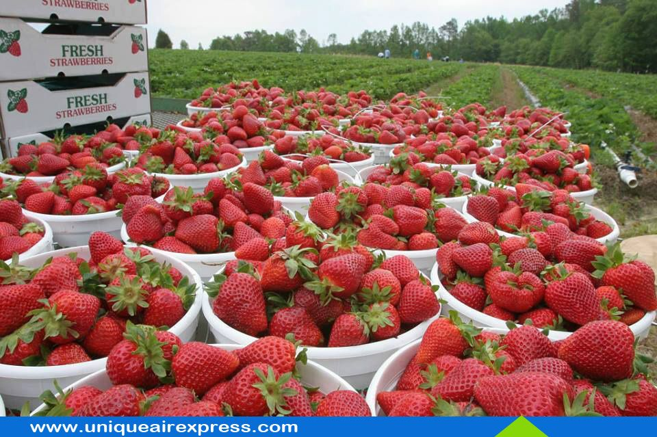 Strawberries - The World's Healthiest Food for You All #Strawberry #HealthyEating