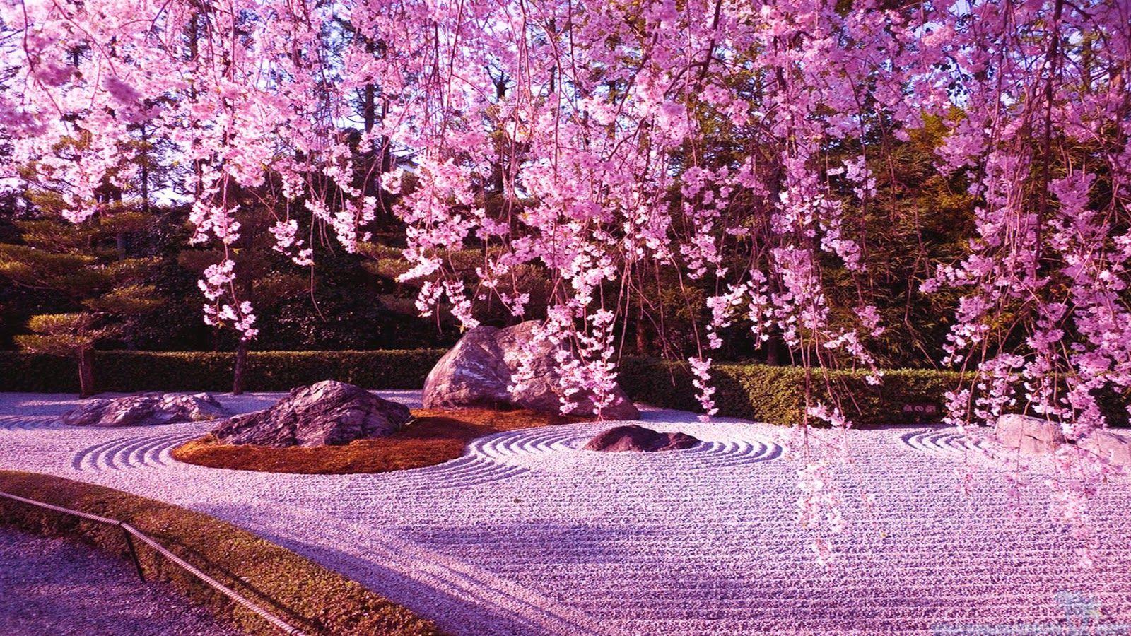 Japanese Cherry Blossom Garden Wallpaper Cherry Blossom Wallpaper Anime Cherry Blossom Blossom Garden