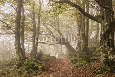 Autumn in the beech forest with fog #Autumn #Beech #Faggeta #Umbria #MonteCucco #Mountain #Landscape #Halloween #Ghost #Trees #Leaves #Park #Nature #Italy #europe #Weather #October