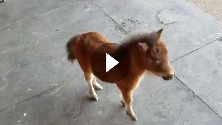 Es Gibt Doch Nichts Schoneres Als Einen Besten Freund Zu Haben Dieses Susse Mini Pferd Folgt Seinem Besitzer Auf Sch Cute Animal Pictures Cute Animals Animals