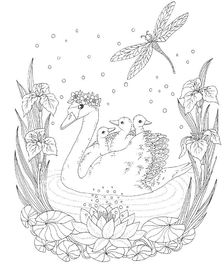 1010+ Majestic Animals Coloring Book Picture HD